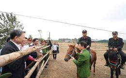 Bộ trưởng Tô Lâm thăm chuyên gia huấn luyện kỵ binh