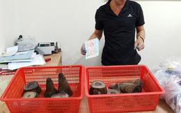 Phát hiện nam hành khách mang theo 6,2 kg sừng tê giác từ nước ngoài về Việt Nam