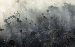 Rừng Amazon gần như đã bão hòa và có thể chuyển sang dạng thải khí CO2 trong 15 năm nữa
