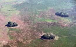 Hé mở bí ẩn không ngờ bên dưới những 'đảo rừng' nằm rải rác trong lưu vực sông Amazon