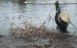 Virus bí ẩn tàn phá các hồ nuôi tôm TQ: Nhiều người chăn nuôi mất trắng, nhà khoa học bó tay
