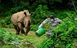 24h qua ảnh: Nhân viên chăm sóc động vật bỏ chạy khỏi tê giác khổng lồ