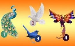 """Chọn 1 con chim để biết ngay """"vận may"""" của mình: Thành công, ổn định hay sắp đổi vận?"""