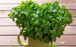 """8 cây xanh là """"sát thủ"""" diệt muỗi: Nếu bạn trồng quanh nhà, muỗi và côn trùng sẽ tránh xa"""