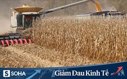 Giữa đại dịch, Trung Quốc ra quyết định mua nông sản từ Mỹ, đem lại thắng lợi gấp 3