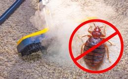 9 cách loại bỏ  lũ côn trùng khó chịu bằng cách tận dụng các sản phẩm tự nhiên có trong nhà