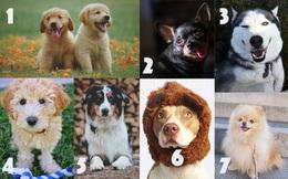 Chú chó nào bạn yêu thích nhất, câu trả lời sẽ tiết lộ rất nhiều về cuộc sống trong tương lai của bạn