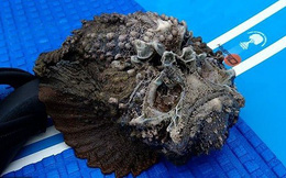 """Giải mã bí ẩn loài cá mặt quỷ được mệnh danh """"chúa tể nọc độc dưới đáy đại dương"""""""