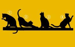 Hãy nhìn vào bức hình, con mèo mà bạn yêu thích sẽ tiết lộ mục đích sống của bạn