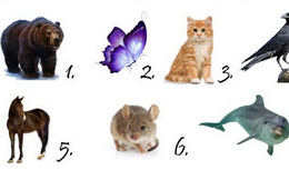 Nếu được chọn, bạn sẽ hóa thân thành loài vật nào? Câu trả lời ẩn chứa điều bạn đang mong cầu nhất bây giờ