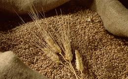 Phương pháp thử thai đáng kinh ngạc bằng 'lúa mạch và lúa mì' thời Ai Cập cổ đại: Chính xác tới 70%!