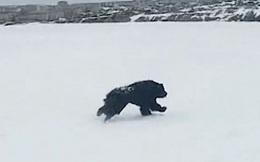 Chú chó kiên quyết nằm 2 tháng trên mặt băng lạnh, khi biết lý do ai cũng nghẹn ngào