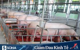 Nhà máy giết mổ và pha lóc thịt lợn 450 tỷ đồng của C.P Việt Nam