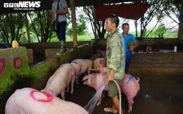 Giá lợn hơi tăng cao kỷ lục, người nuôi vẫn không muốn bán