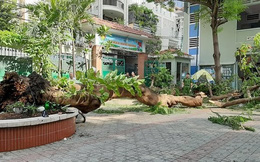Phụ huynh hoảng loạn, tức tốc bỏ cả làm khi biết cây trong trường đổ khiến 1 học sinh tử vong ở TP.HCM