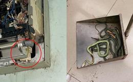 Tháo điều hòa ra vệ sinh vì bật 16 độ không mát, cả gia đình kinh sợ vì cảnh tượng bên trong