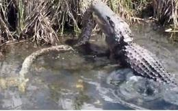Video: Trăn khủng bất lực dưới hàm cá sấu sông Nile