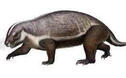 Hình dạng quái dị của loài 'thú điên' cách đây 66 triệu năm