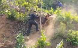 Cháy rừng bất thường ở rừng Hải Vân, nơi nghi ngờ phạm nhân Triệu Quân Sự lẩn trốn