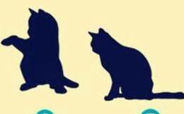 Hãy đoán xem con nào không phải là con mèo để biết được người khác nghĩ gì về bạn, là con số bí ẩn hay đơn giản, dễ chịu