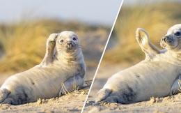 Hải cẩu vẫy tay chào khiến nhiếp ảnh gia... sửng sốt