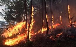 Chủ tịch nước truy tặng Huân chương cho người phụ nữ quên mình cứu rừng