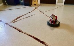 Chớ dại dùng robot hút bụi nếu nhà nuôi chó mèo, nếu không sẽ lãnh hậu quả kinh dị