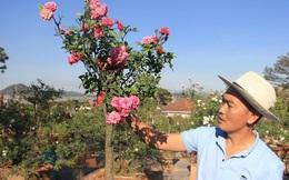 """Đột nhập vườn bonsai hoa hồng bạc tỷ của """"ông chú"""" điển trai"""