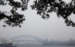 Ngập bụi mịn vì cháy rừng, Sydney đang trở thành 'phòng thí nghiệm' của cả thế giới