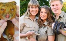 Ra tay cứu chữa hàng nghìn con vật trong thảm họa cháy rừng Úc, gia đình 'thợ săn cá sấu' lừng danh được dư luận hết lời tán dương