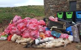 Hình ảnh xác cá heo nằm ngay cạnh núi rác thải là minh chứng cho những hiểm họa lớn mà đồ nhựa gây ra đối với hệ sinh thái biển
