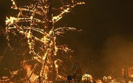 Những cơn mưa 'vàng' giúp kiểm soát 'hỏa ngục' cháy rừng ở Australia