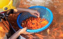 Chợ cá lớn nhất Hà Nội tất bật trước ngày ông Công ông Táo