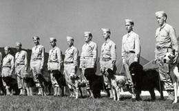 Chó nghiệp vụ trong tác chiến quân sự hiện đại