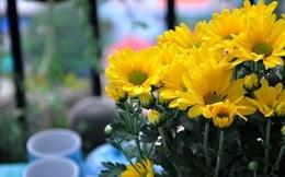 Sai lầm cần tránh khi cắm hoa trên ban thờ ngày Tết
