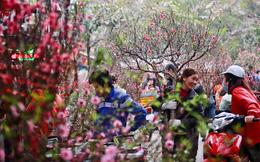 Mách bạn các cách giữ hoa đào tươi lâu và nở đúng ngày