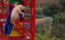 Bắt lợn chơi trò mạo hiểm, công viên giải trí Trung Quốc bị cư dân mạng chỉ trích