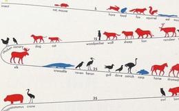 [Vietsub] Tại sao các loài động vật lại có tuổi thọ khác nhau đến vậy?