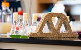 Khoa học tạo ra 'gạch sống': những viên gạch biết quang hợp, hấp thụ CO2, sinh sản được mà vẫn cứng cáp như thường