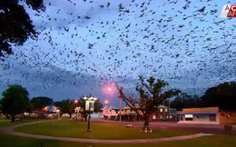 Cả thị trấn nhỏ sợ hãi, phải di tản khi bỗng nhiên bị hàng ngàn con dơi xâm chiếm, bay đầy cả vùng trời