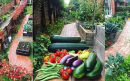 Khu vườn mùa xuân đẹp như tranh vẽ với đủ loại trái cây và rau củ của đôi vợ chồng đam mê trồng trọt