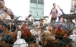 Một số nơi xuất hiện dịch cúm gia cầm A/H5N6