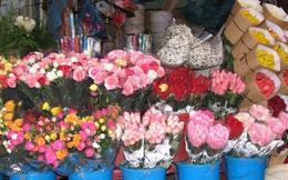 Giá hoa hồng Đà Lạt giảm sốc mùa Valentine