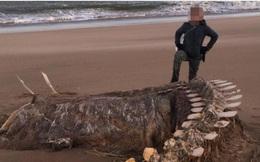 Bộ xương khổng lồ của sinh vật lạ trôi dạt vào bờ biển, nhiều dân bản xứ tin rằng đó là xác của quái vật hồ Loch Ness nổi tiếng