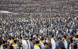 """Hơn nửa triệu con chim cánh cụt hoàng đế lúc nha lúc nhúc tụ tập về """"lãnh địa"""" phía nam Đại Tây Dương để bắt đầu mùa sinh sản"""
