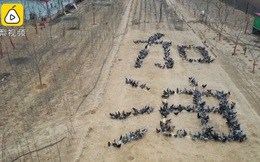"""Nông dân xếp 1000 con gà thành chữ """"Trung Quốc cố lên"""" để động viên nhau giữa dịch Covid-19"""
