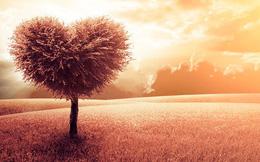 Ba điều trân quý không được phép buông bỏ nếu bạn mong cầu có được hạnh phúc thật sự: Tiền nhiều hay ít tuyệt không ảnh hưởng!