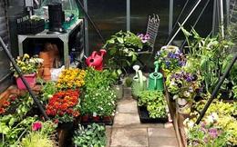 Bà mẹ trẻ từ chối công việc thành thị để về quê trồng cả vườn rau đẹp như tranh vẽ