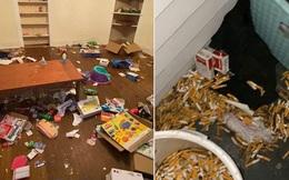 Khách trọ chuyển đi bỏ lại căn phòng ngập ngụa trong rác thải và mùi hôi thối, chủ nhà phải 'ngậm đắng nuốt cay' chịu thiệt hại hơn 200 triệu