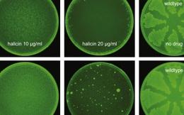 Trí tuệ nhân tạo vừa giúp các nhà khoa học tìm ra một loại 'kháng sinh mạnh nhất' từ trước đến nay
